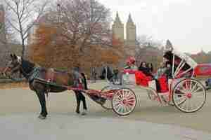 horse carriage tours central park