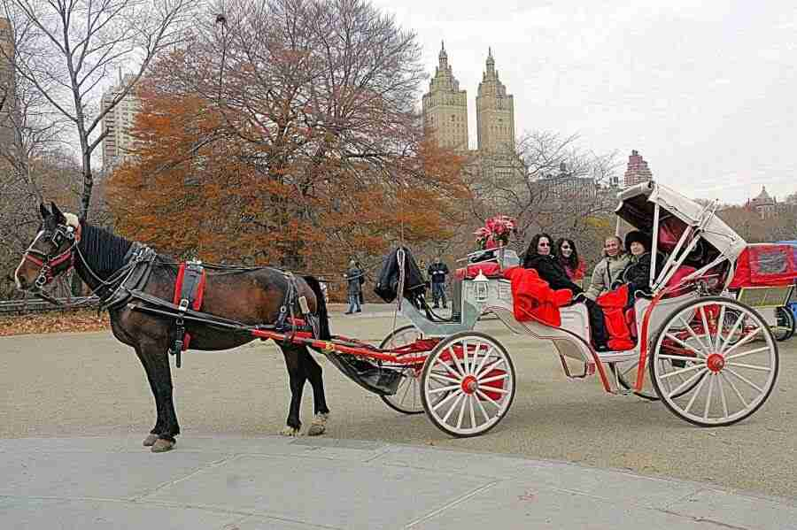 central park horse carriage ride. Black Bedroom Furniture Sets. Home Design Ideas