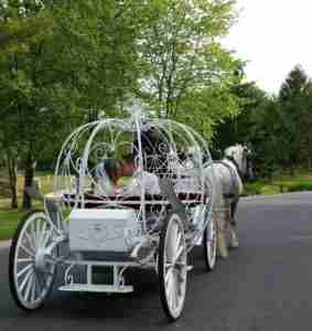 private horse and carriage tours for weddings