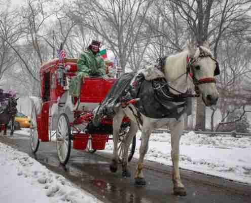 horse and buggy tours in central park